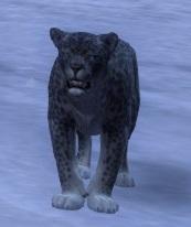 Af02 panthere des neiges