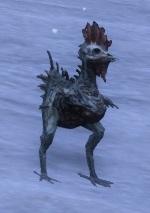 Bz02 poulet mort vivant