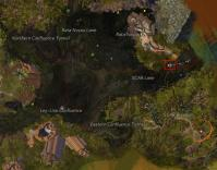 Gw2 tangled depths insight tangled hive