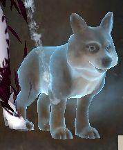 Pet guinefort compressed